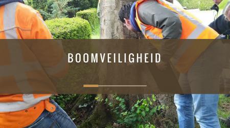 pcbomen_boomveiligheid