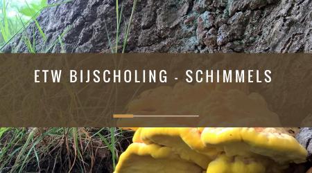 pcbomen_-etw-bijscholing-schimmels