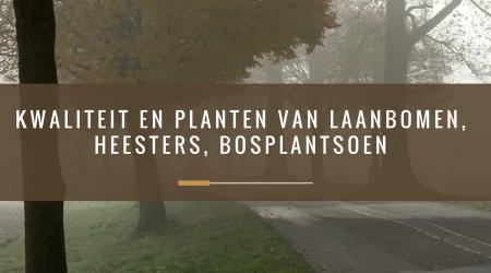 PCbomen_Kwaliteit en planten van laanbomen, heesters, bosplantsoen