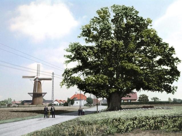 pcbomen-kroezeboom
