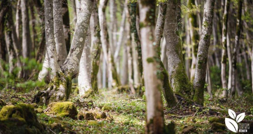 Een afbeelding van bomen