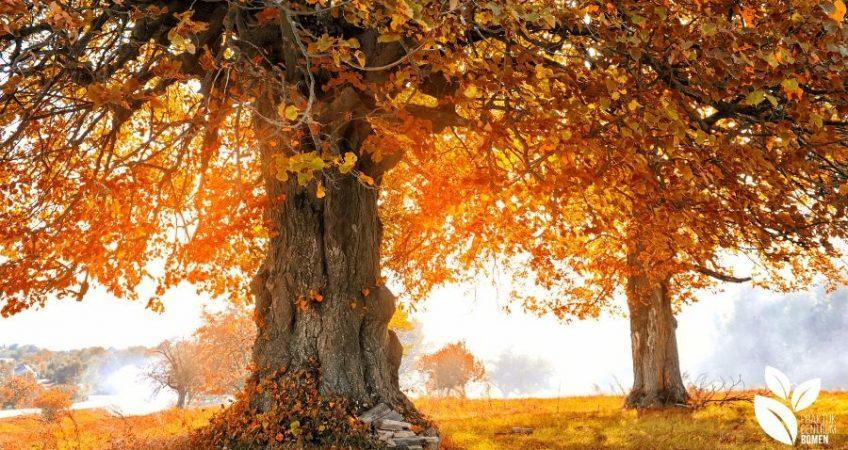 """Afbeeldingsresultaat voor herfst"""""""