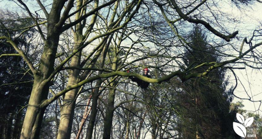 Man klimt in boom voor ETW-opleiding
