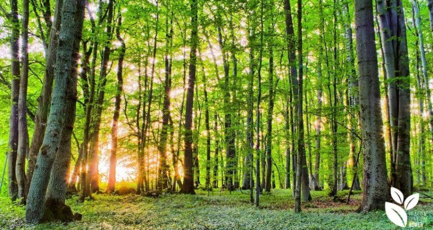 Bomen in de lente