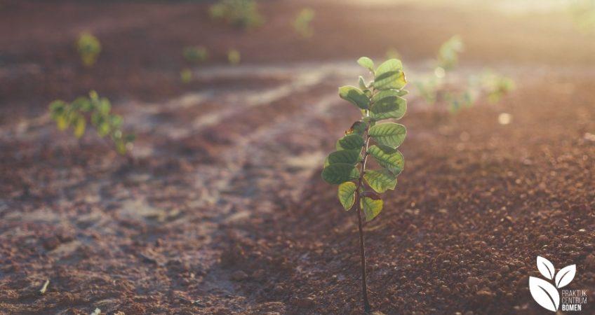 Plantje in de grond