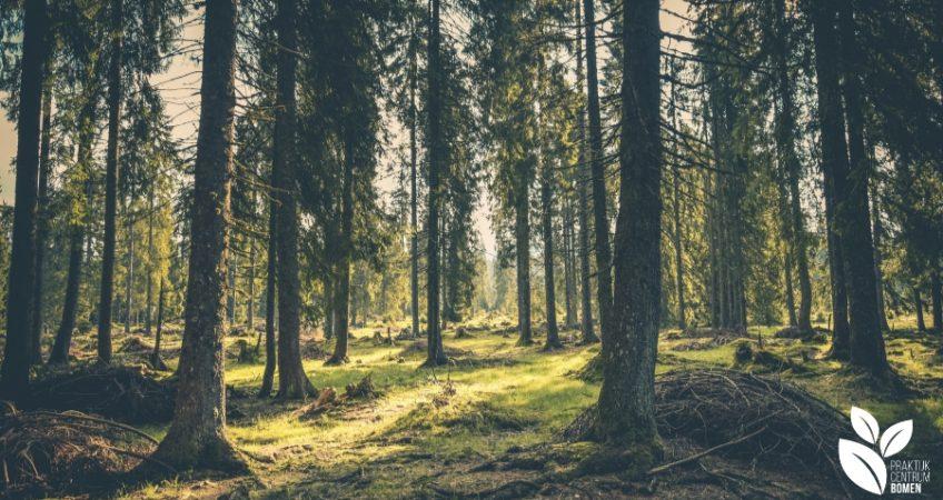 Bos met bomen