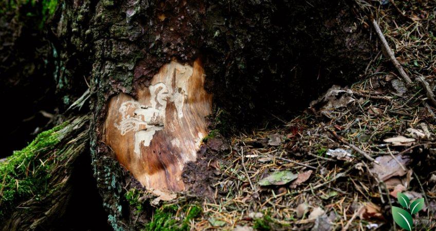 Ingezoomde foto van een boom