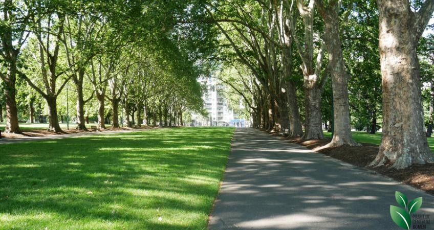 weg van asfalt met gras en bomen ernaast