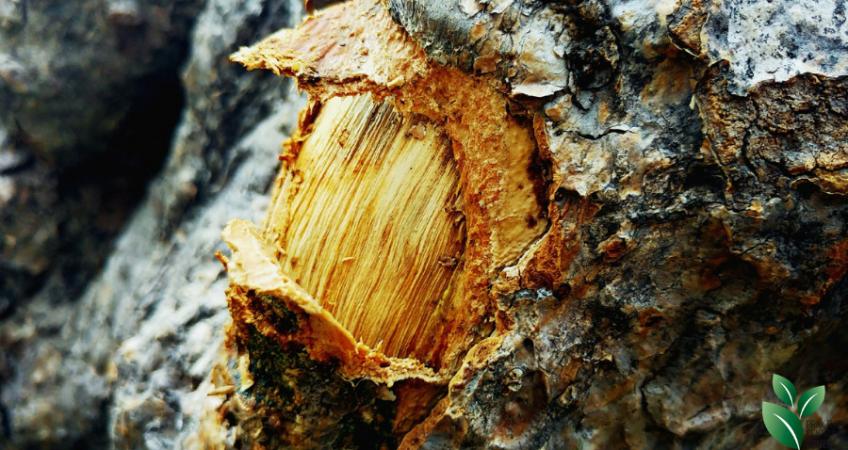Mineralen van een boom