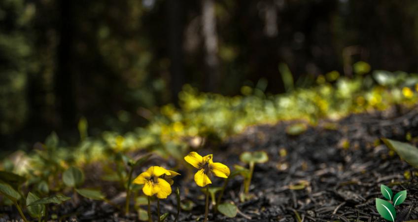 Kleine bloemen in de grond