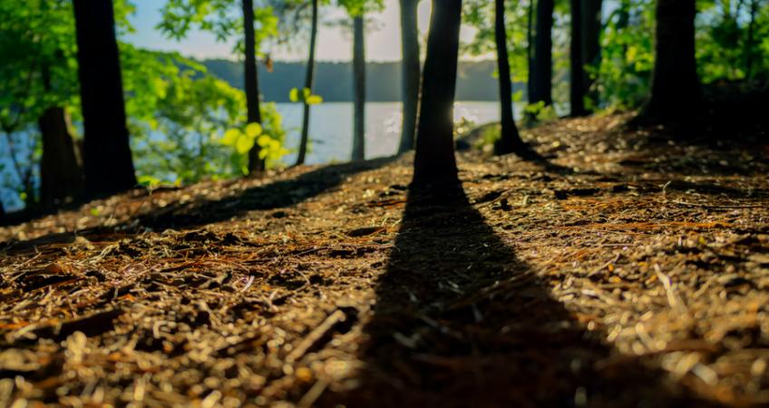 Bos met op de achtergrond water