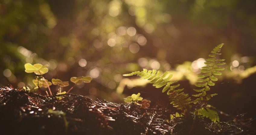 Kleine planten in de natuur